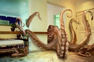 paul octopus